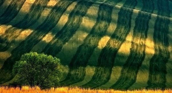 Πράσινος Κόσμος