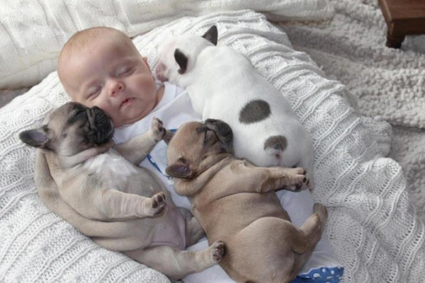 Το μωρό και τα κουτάβια