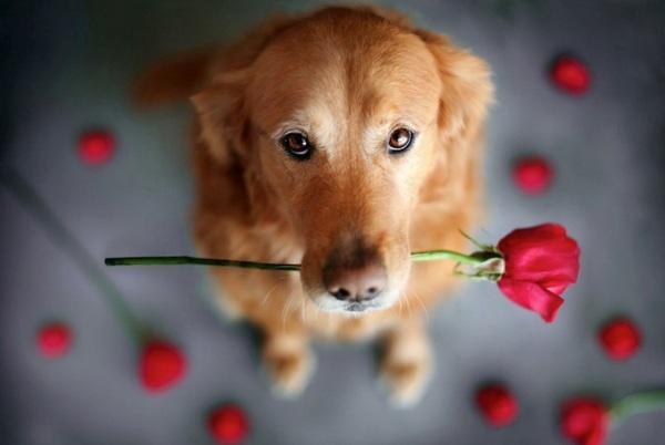 Happy dog από την Jessica Trinh
