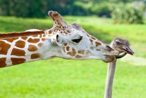 Ασυνήθιστες Φιλίες Ζώων Που Θα Λατρέψετε