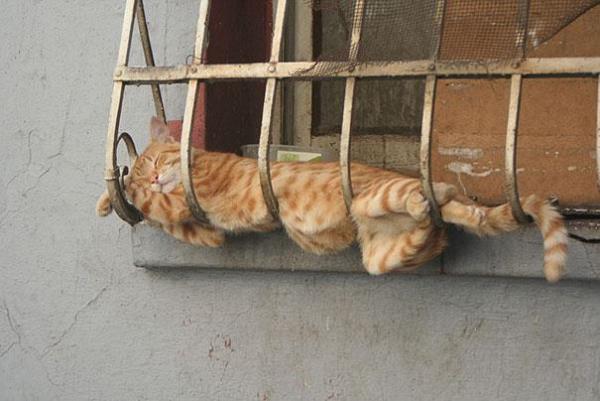 gates-pou-exoun-kataktisei-tin-texni-tou-sleep-fu-07