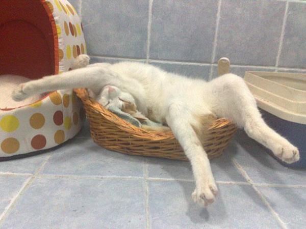gates-pou-exoun-kataktisei-tin-texni-tou-sleep-fu-11
