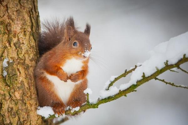 Μαγικές Φωτογραφίες Ζώων Το Χειμώνα