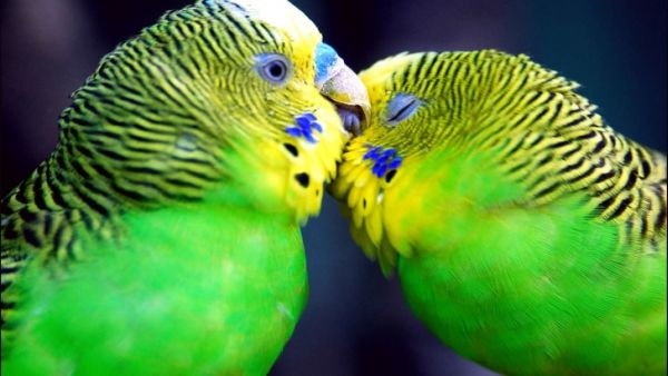 Χαριτωμένα Ζωάκια Ανταλλάζουν Φιλιά