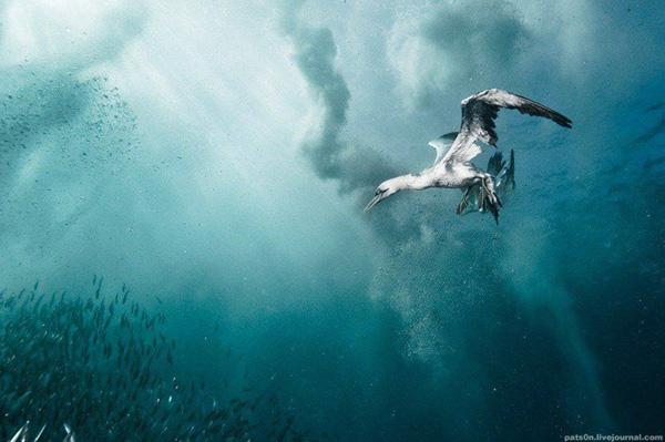 Ο Υποβρύχιος Κόσμος από τον Alexander Safonov
