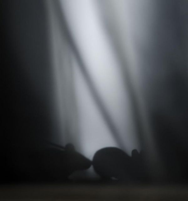zwa-tou-dasous-se-egkataleleimmena-spitia-12