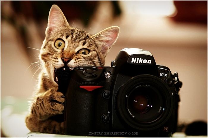 Όμορφες Φωτογραφίες των Γατών